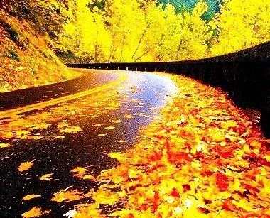 Autumn Road, Columbia Gorge, Oregon