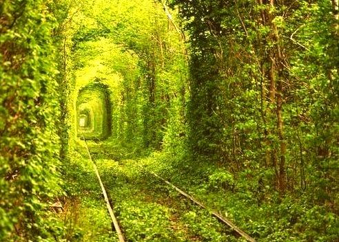 Tree Tunnel, Rivne, Ukraine