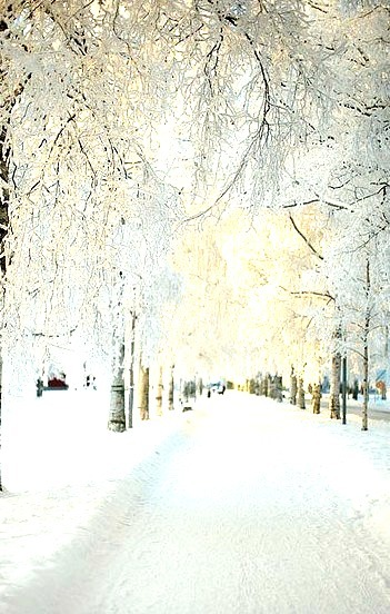 Snowy Morning, Dalarna,  Sweden