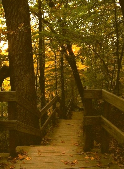 Wooden Stairs And Boardwalk Cuyahoga Valley, Ohio, USA