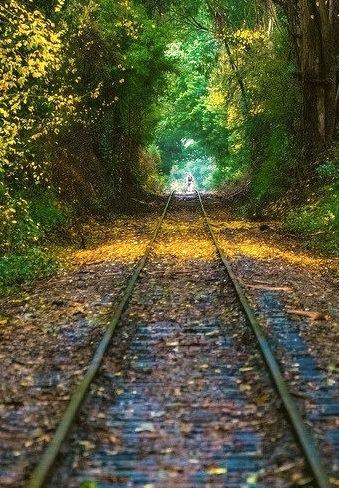 The green tunnel, Santa Cruz Area / California